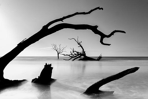 Gallery - Tony Sweet