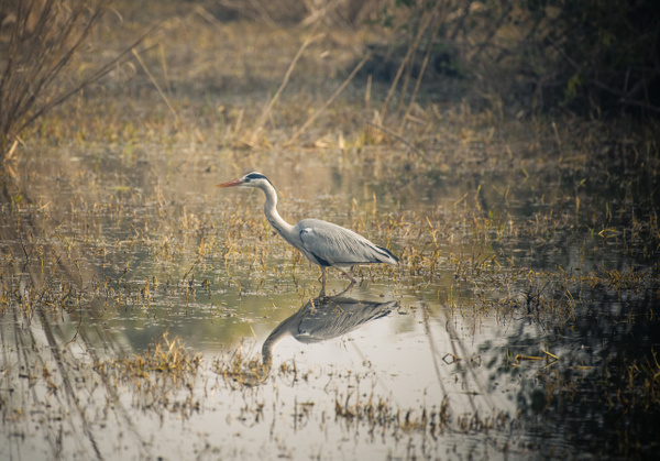 Keoladeo National Park - Evacod Arts :: Gallery