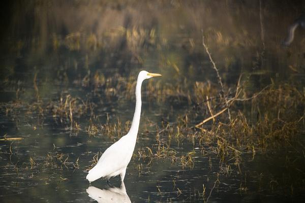 Bird At Keoladeo National Park - Evacod Arts :: Gallery