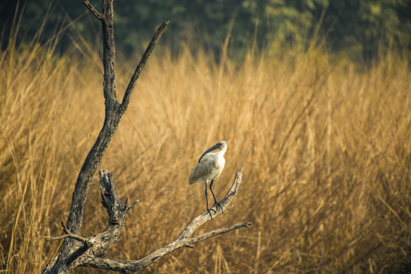 Bird Keoladeo National Park - Evacod Arts :: Portfolio