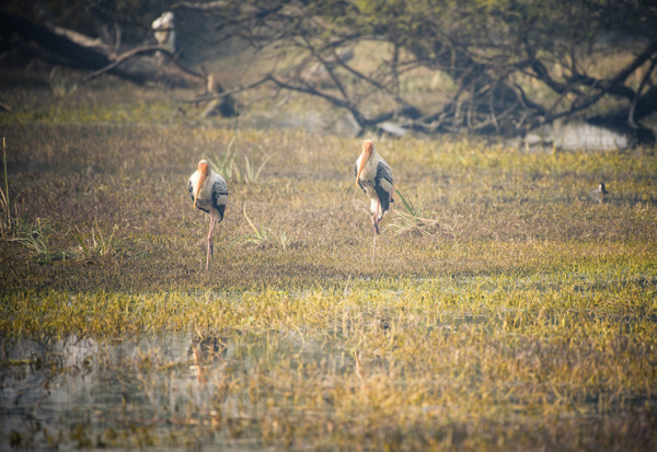 Painted Stork - Evacod Arts :: Gallery