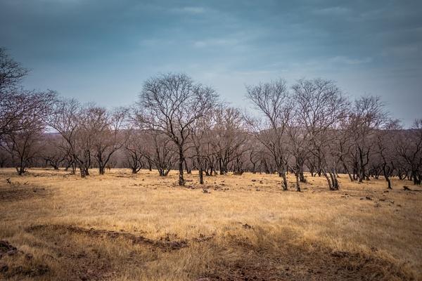 Landscape Ranthambore - Evacod Arts :: Gallery
