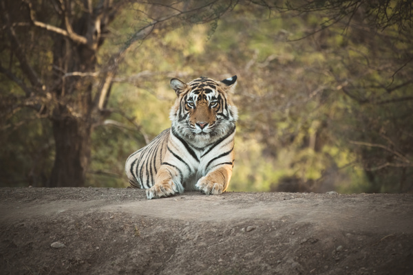 Tiger Jai - Evacod Arts :: Portfolio