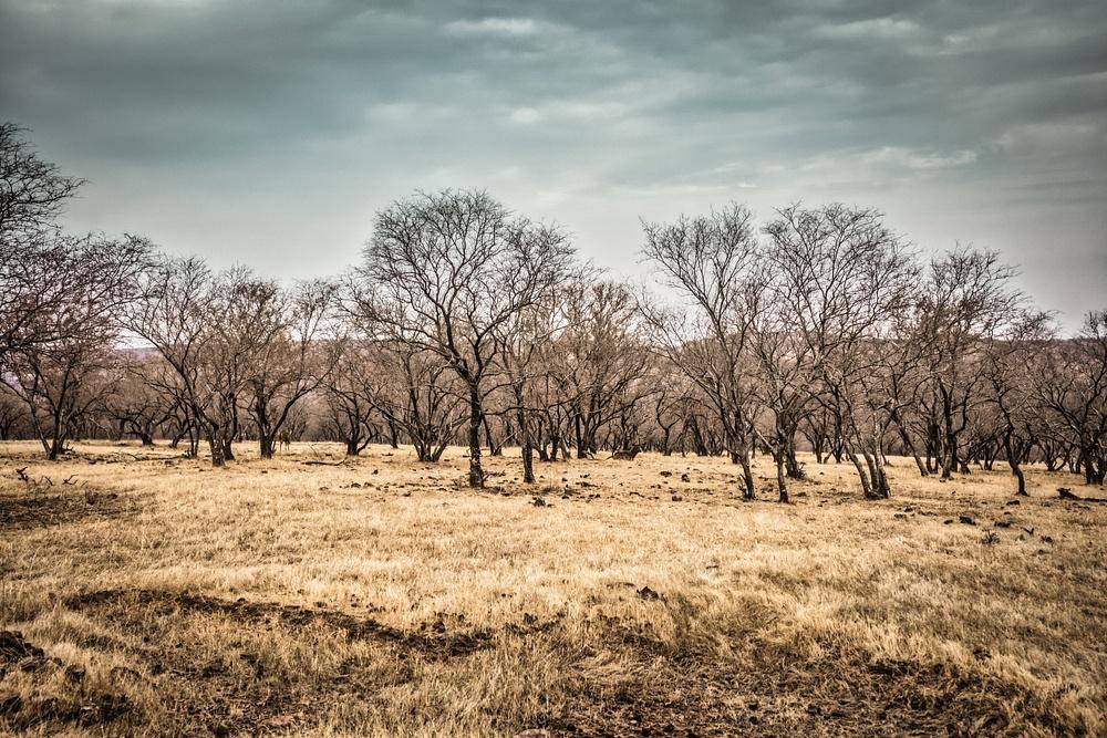 Landscape-Ranthambore