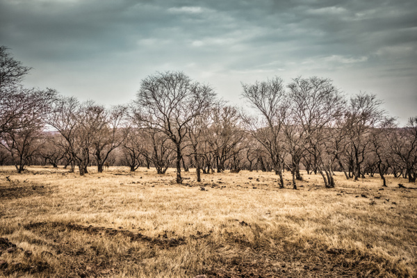 Landscape-Ranthambore - Evacod Art :: Home,Wildlife Photography, India