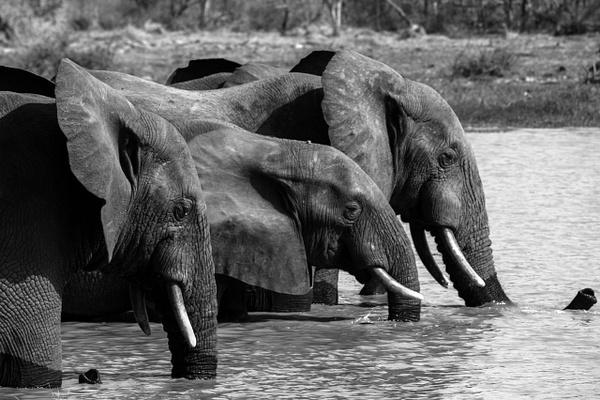 Reserve de Nazinga, Burkina Faso - Places - Justine Kirby Photography