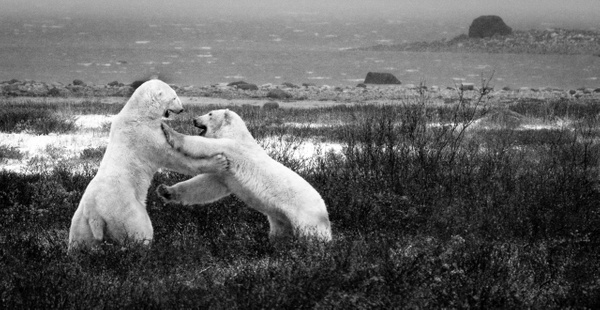 Near Churchill, Canada - Justine Kirby Photography