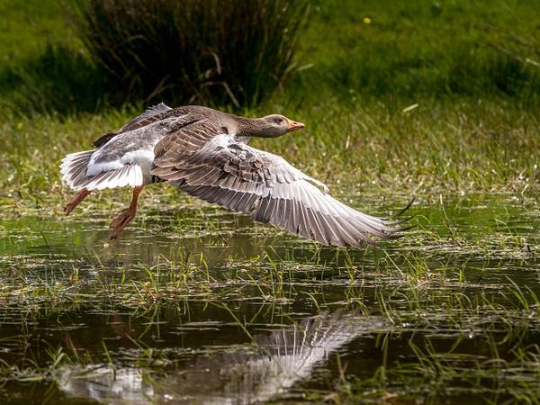 Walk 17-29 - Shropshire Wildlife