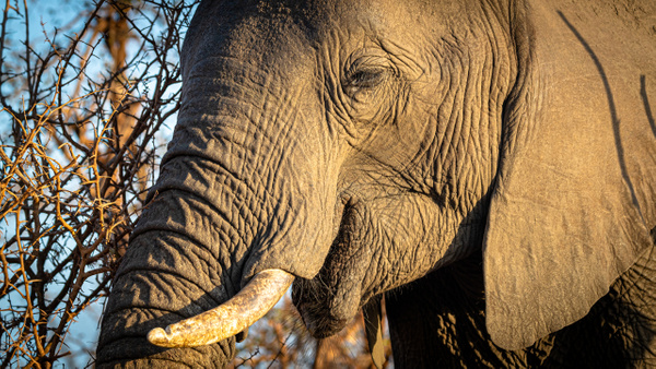 Elephant kruger national park-1 - Wildlife - Garth Fuchs Photography