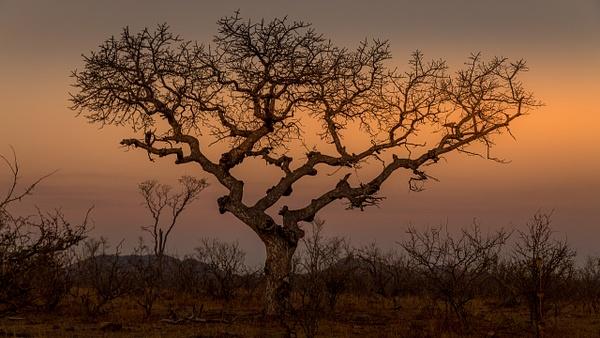 African Bush kruger national park-2 - Wildlife - Garth Fuchs Photography