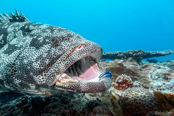 DIVE - Mérou 001 - Underwater - Patrick Eaton Photography