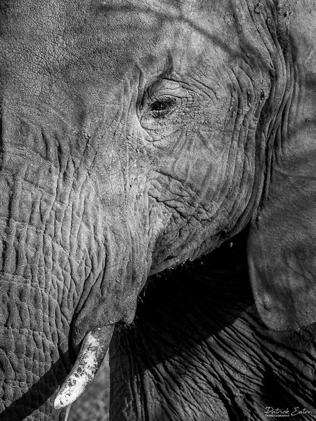 Safari - Elephant 001 - Black & White - Patrick Eaton Photography