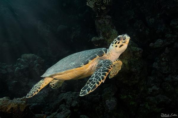 2020 Sharm El-Sheikh - Turtel 001 - Underwater - Patrick Eaton Photography