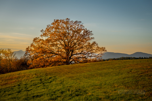Biltmore Estate - Sunset Tree by CliftonHaleyPhotography