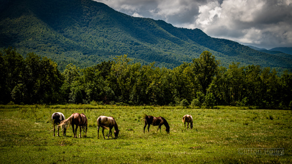 Cades Cove, TN, USA by CliftonHaleyPhotography