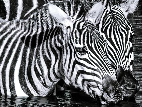 Tanzania-3 - Tanzania - Kirit Vora Photography