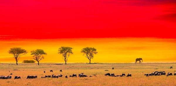 Tanzania-7 - Tanzania - Kirit Vora Photography