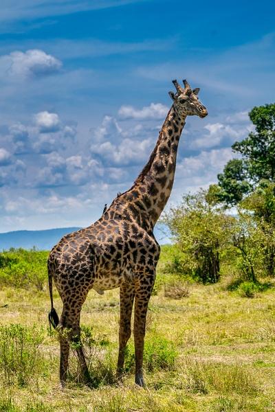 Tanzania-4 - Tanzania - Kirit Vora Photography