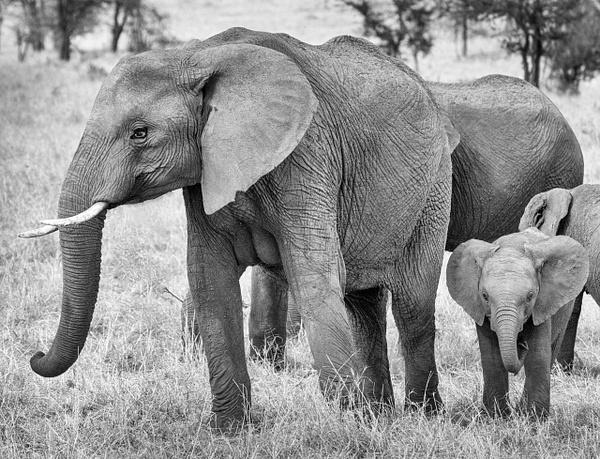 Tanzania-9 - Tanzania - Kirit Vora Photography