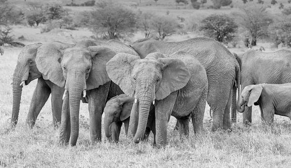 Tanzania-10 - Tanzania - Kirit Vora Photography