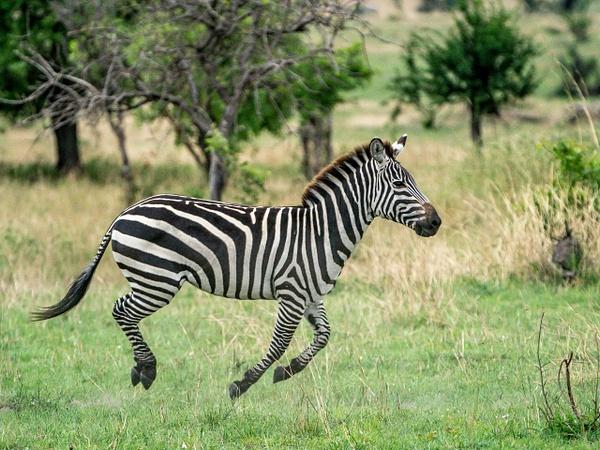Tanzania-1 - Tanzania - Kirit Vora Photography