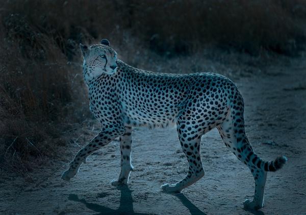 Tanzania-13 - Tanzania - Kirit Vora Photography