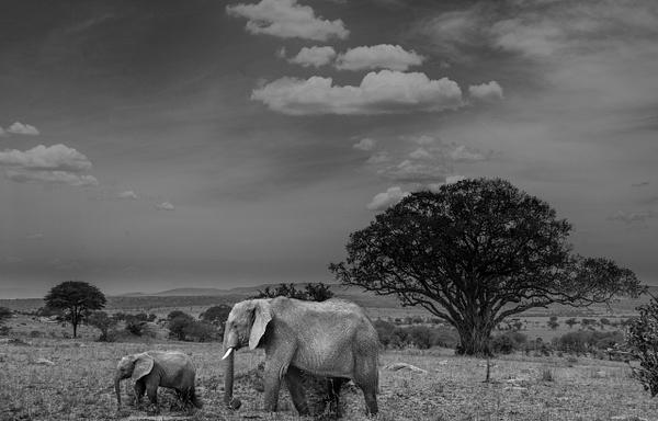 Tanzania-8 - Tanzania - Kirit Vora Photography