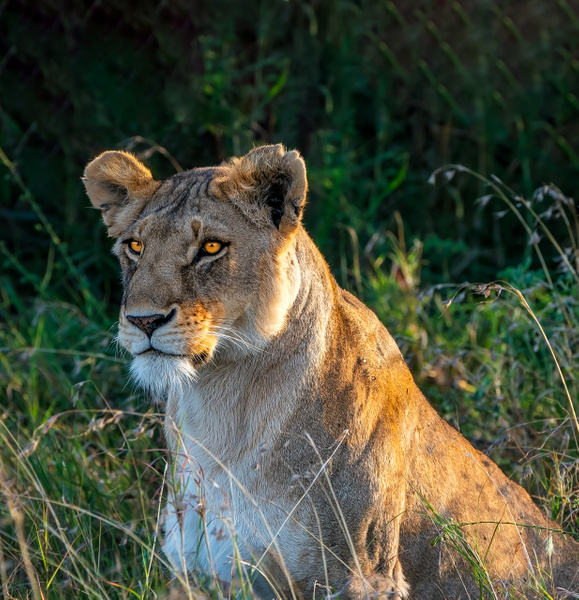 Tanzania-16 - Tanzania - Kirit Vora Photography