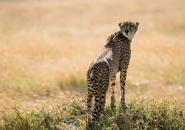 Tanzania-15 - Tanzania - Kirit Vora Photography