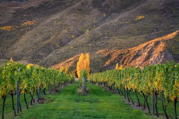 Glenorchy Vinyards - New Zealand - Kirit Vora Photography