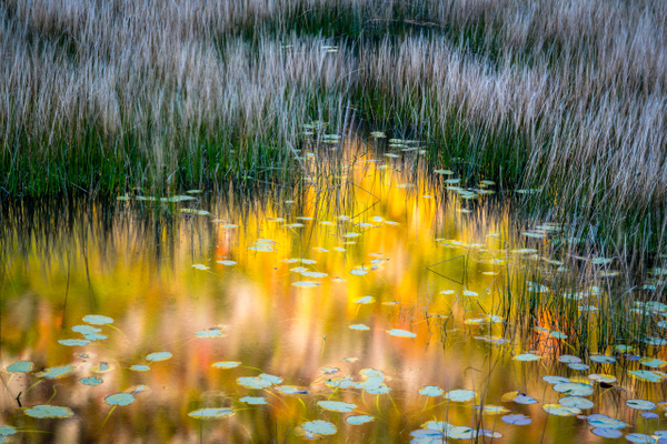 splendor in weeds - Maine Acadia Park - Kirit Vora Photography