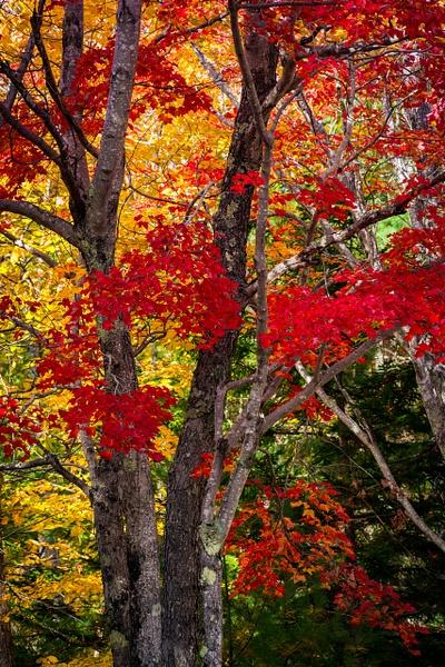 Red Glory - Maine Acadia Park - Kirit Vora Photography