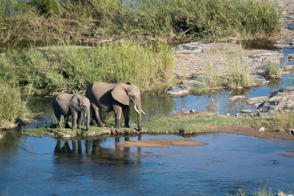 South-Africa-Kruger-Elephants River