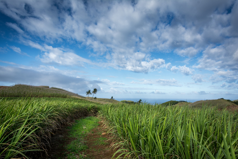 Mauritius-Sugarcane