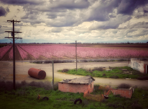 Farm, CA - California - Joanne Seador Photography