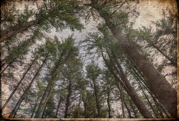 Trees 3, NY - Trees - Joanne Seador Photography