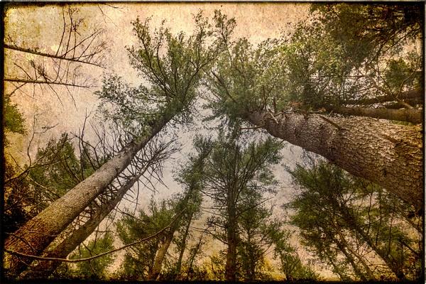 Trees 1, NY - Trees - Joanne Seador Photography