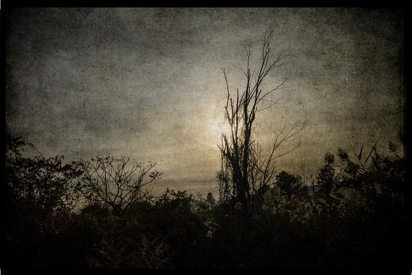 Olana Swamp, 1 - Olana - Joanne Seador Photography