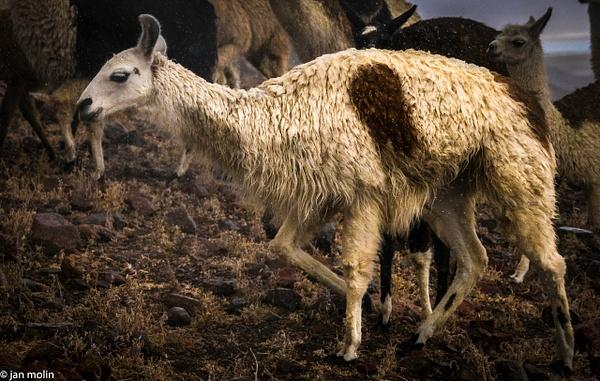 _DSC0258 - Bolivia uyumi saltlake, la paz, madidi and Tiwanaku