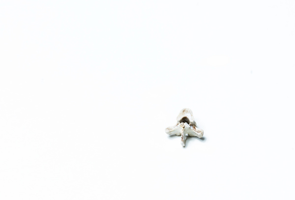 _DSC0378 - Close-ups - Molin Photos