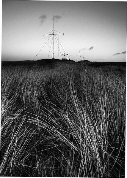 rise frong2 - North Jutland - Molin Photos
