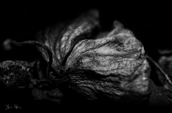something in the pot bw2 - flower of all kind and leaves molin photografy