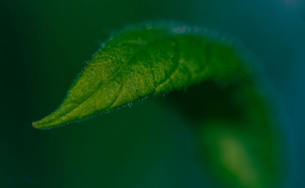 greenleaf - flower of all kind and leaves molin photografy