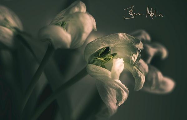 Dark flower2 - flower of all kind and leaves molin photografy