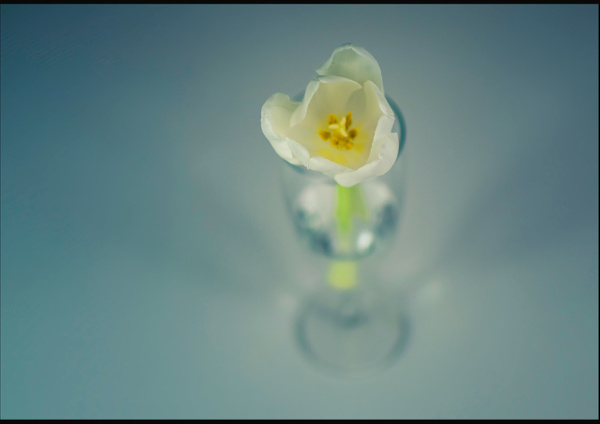 single flower - flower of all kind and leaves molin photografy