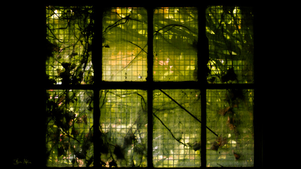 green window - Close-ups - Molin Photos