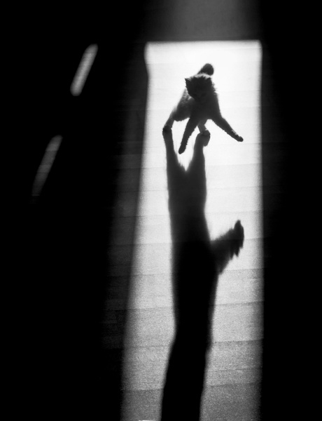 jumping shadow cat2 - Copenhagen City, denmark