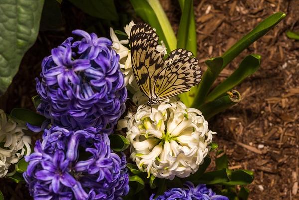 Butterflies by Luc Jean by Luc Jean