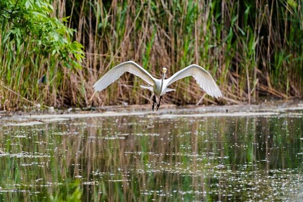 Birds by Luc Jean