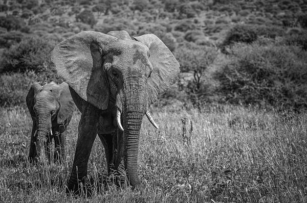 Tanzania by Andreas Maier